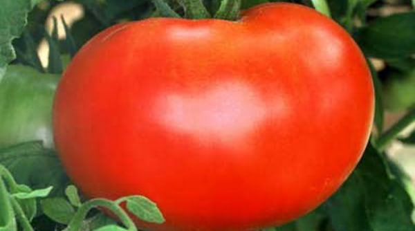 The price of tomatoes depends on their appearance