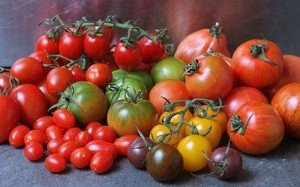 varieties of tomatoes for the greenhouse